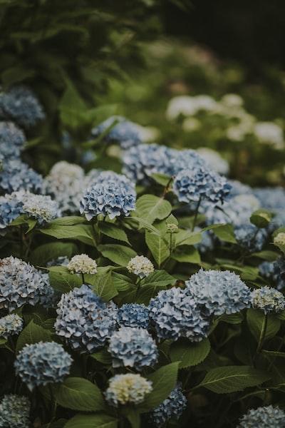 3987. Virágok