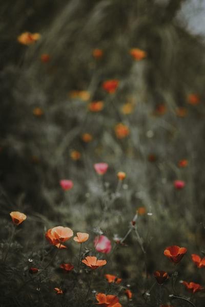 3882. Virágok