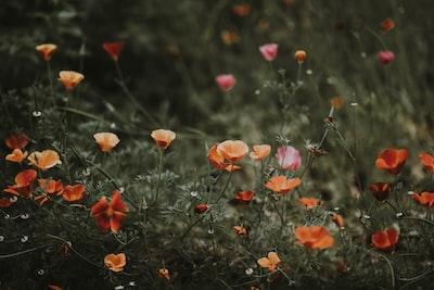 3940. Virágok