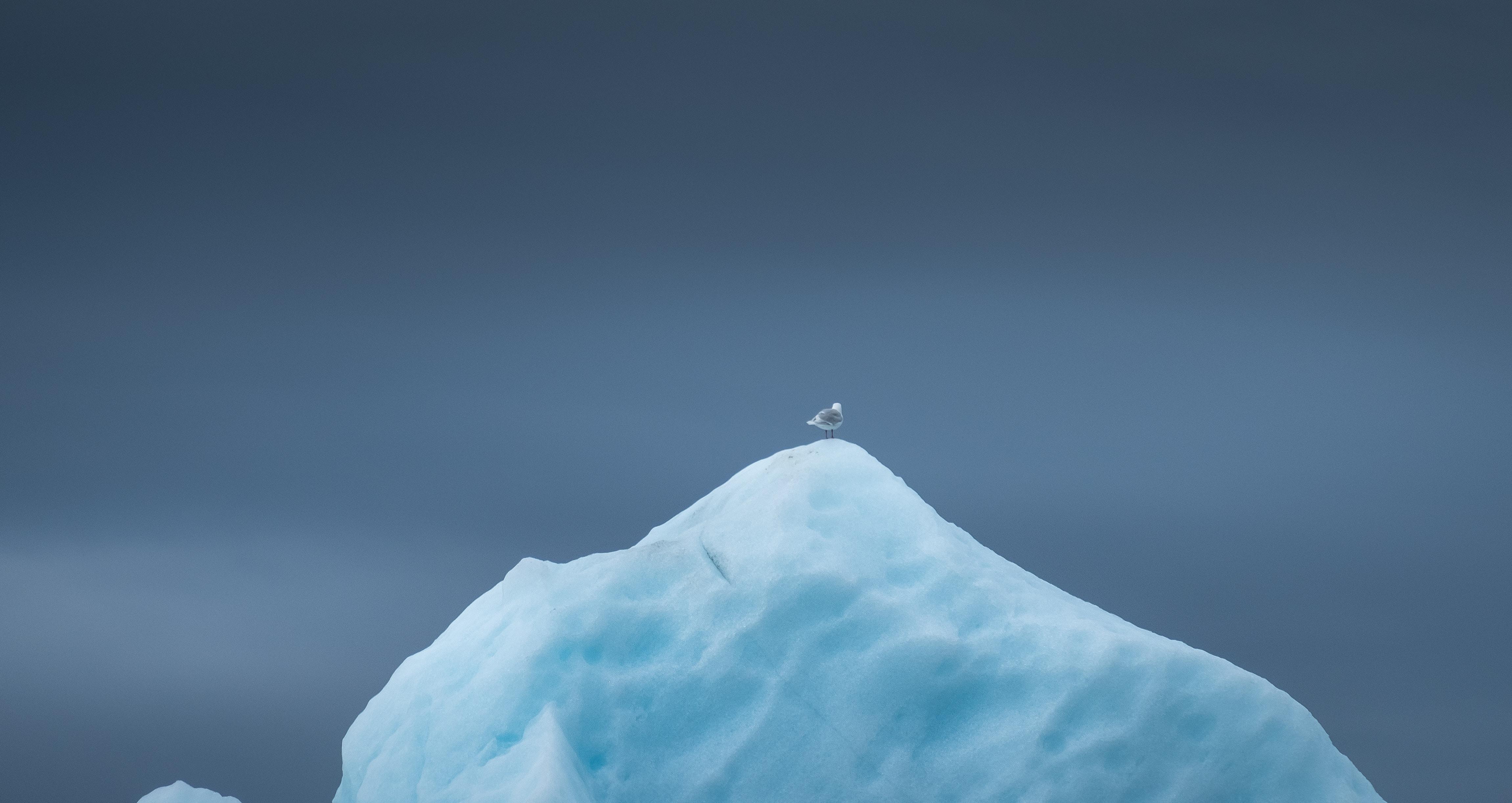 white and brown bird on iceberg wallpaper