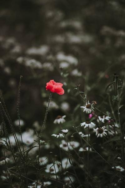 3920. Virágok