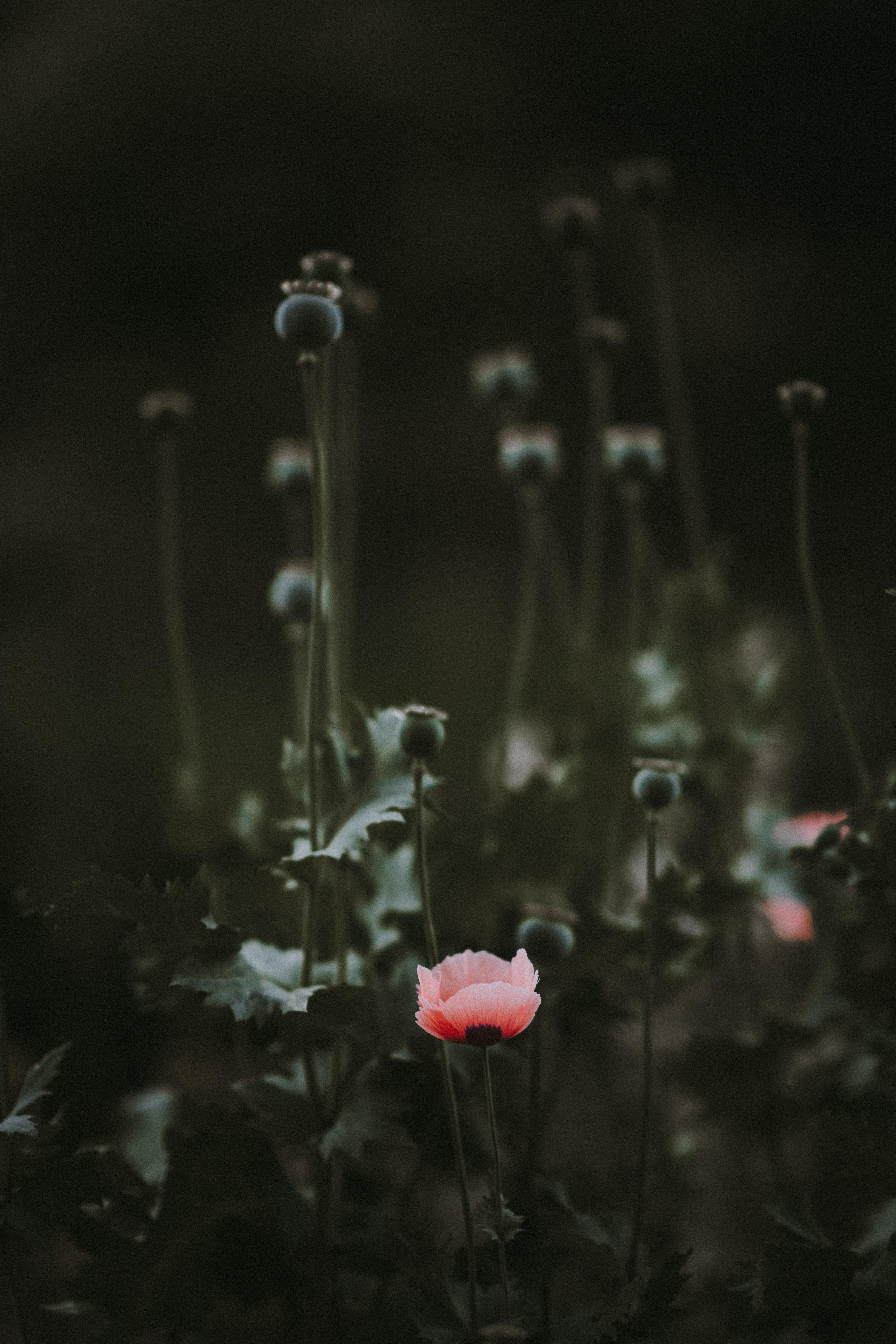 red petal flower plant