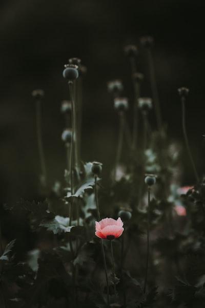3906. Virágok