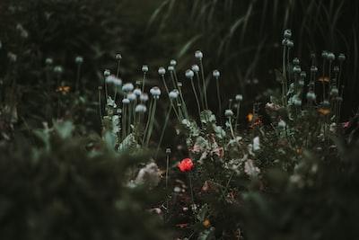 3892. Virágok