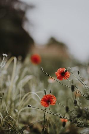 3983. Virágok