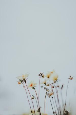 3886. Virágok