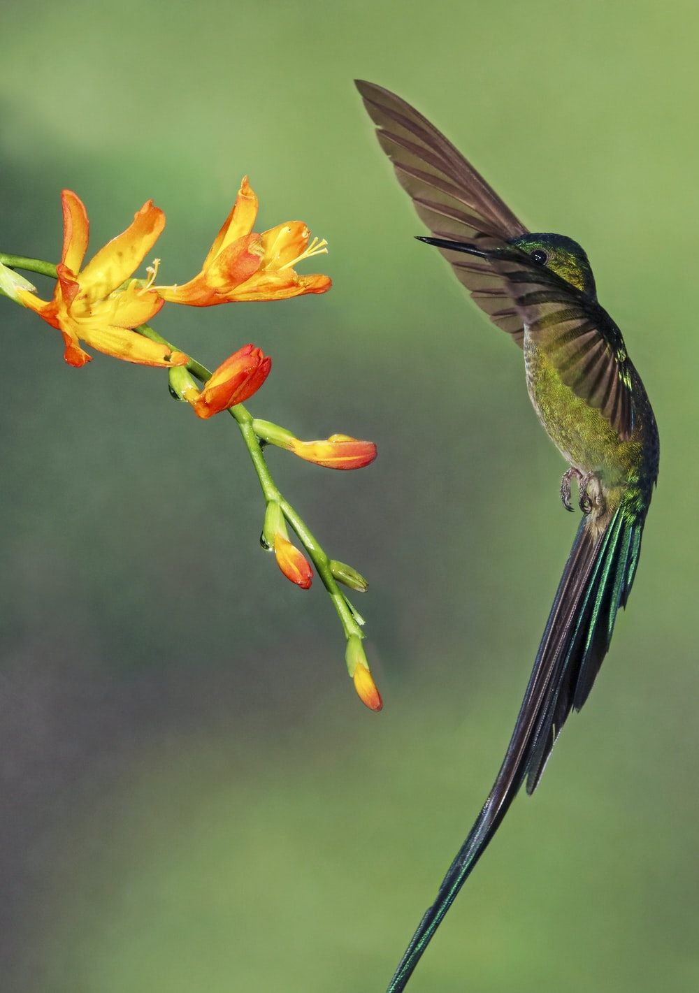 macro photography of bird and flower