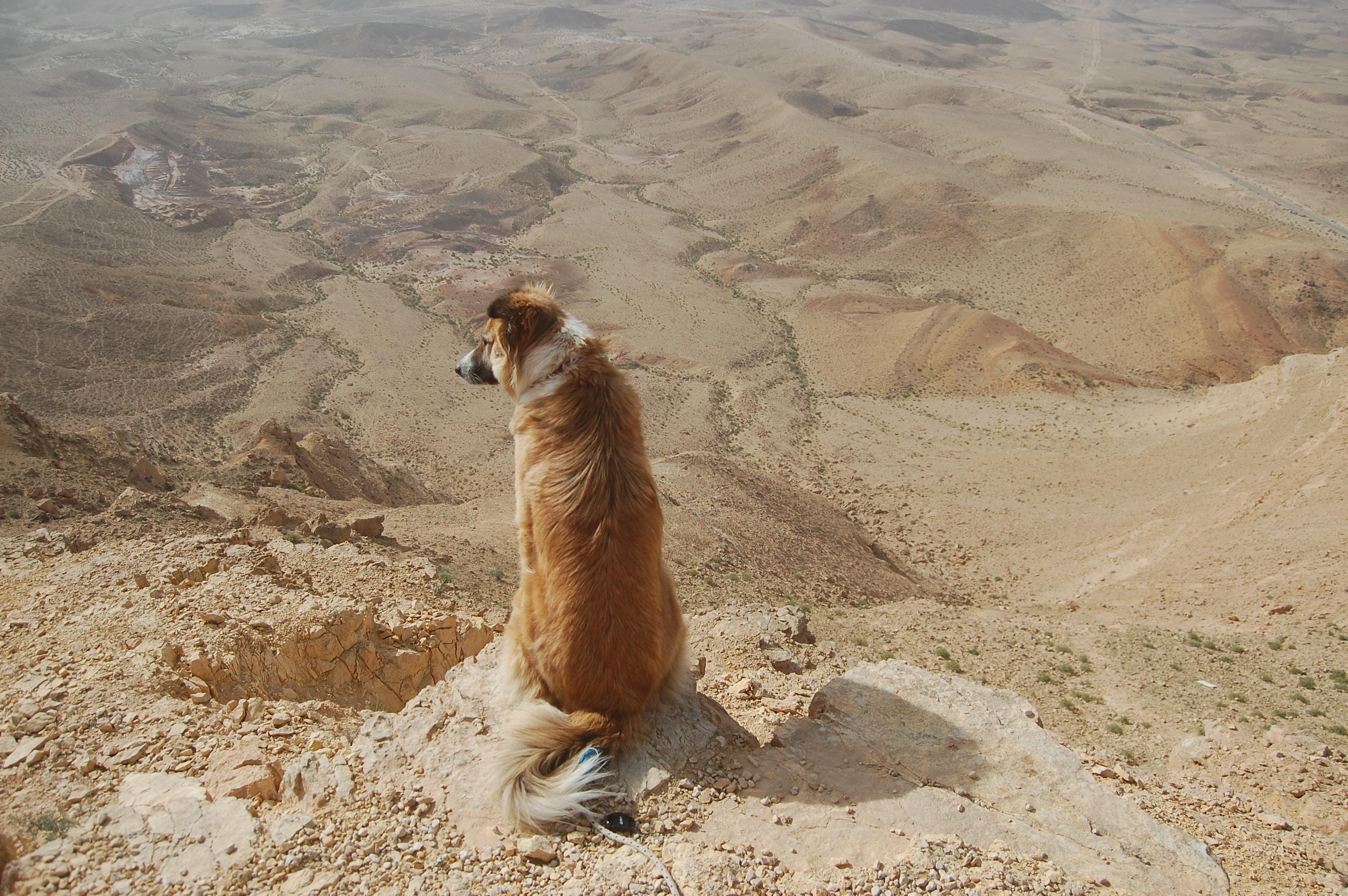 dog sitting on rock mountain