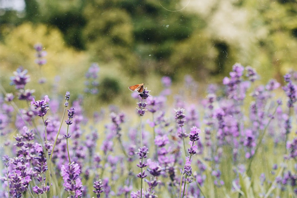 insect on purple flowering plant