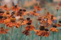 brown petaled flowers