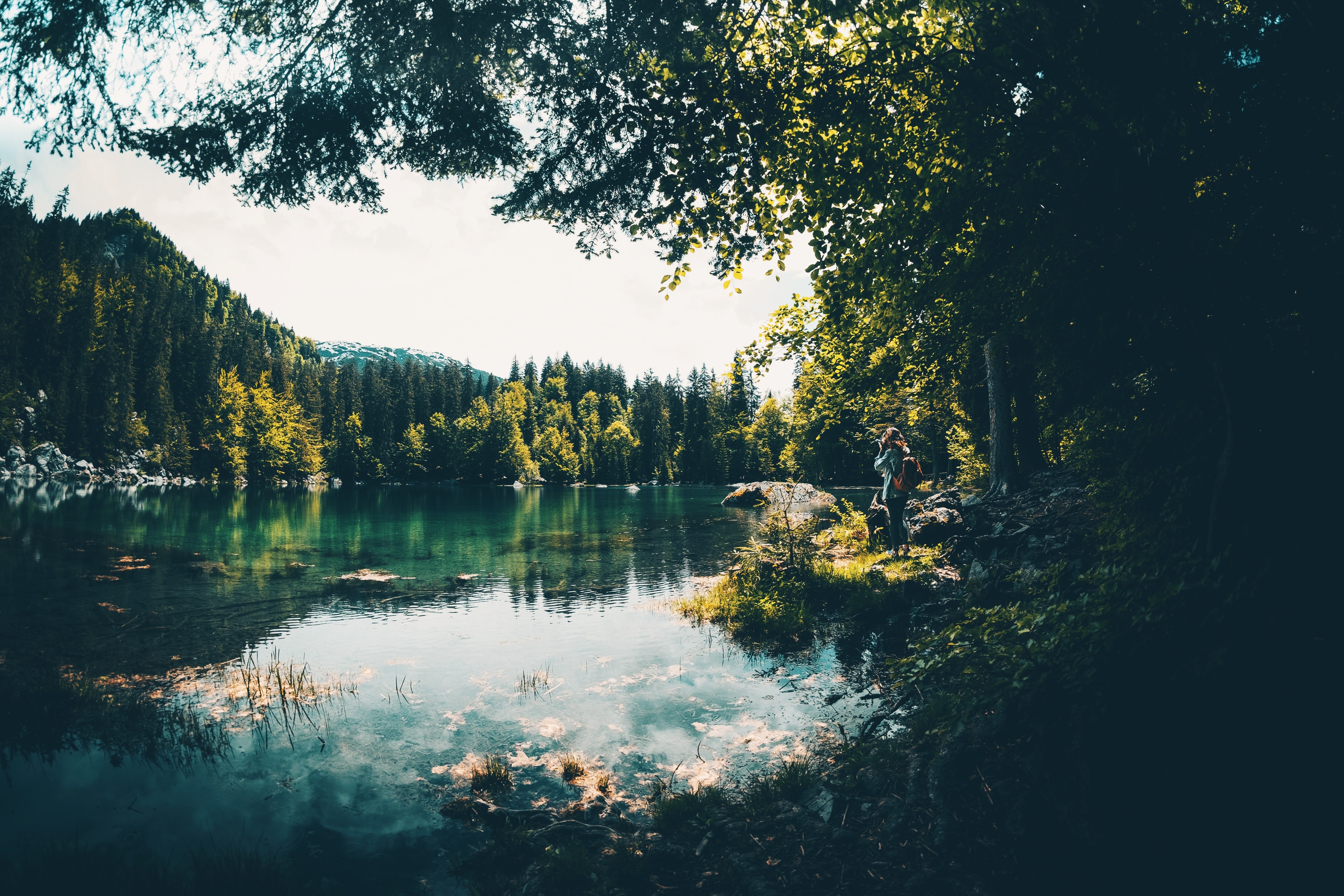 lake surrounded by green trees