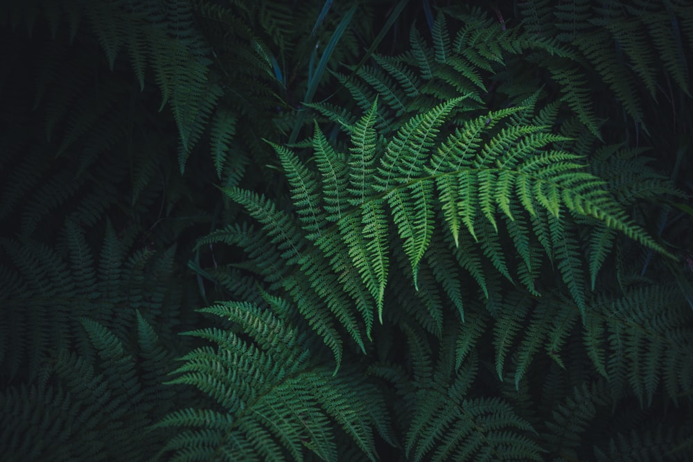 green ferns plant