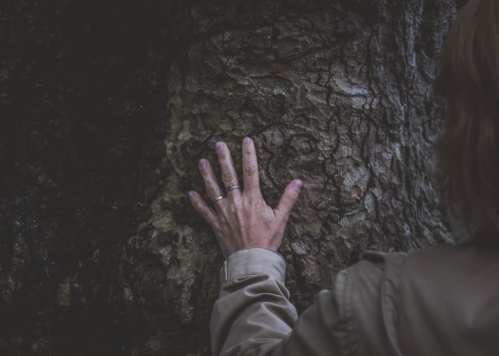 person touching the tree's trunk