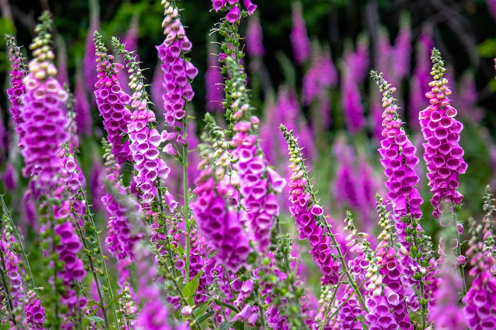 Violet flower pictures download free images on unsplash shallow focus photography of pink flowers in the meadows mightylinksfo