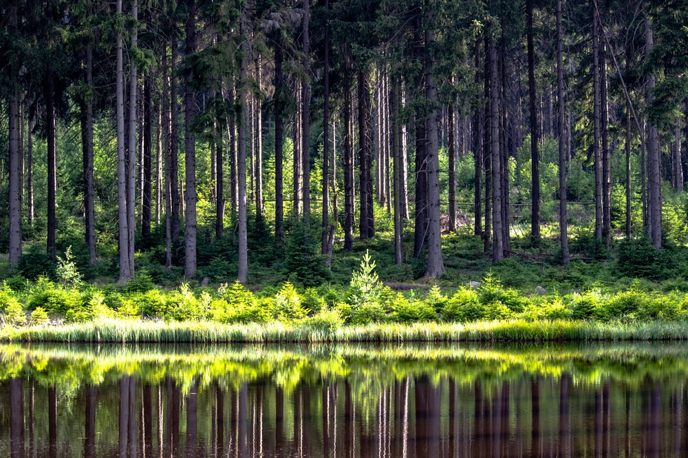panoramic photography of forest