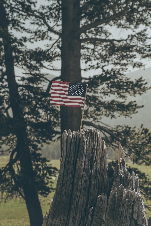 flag of United States on tree stump