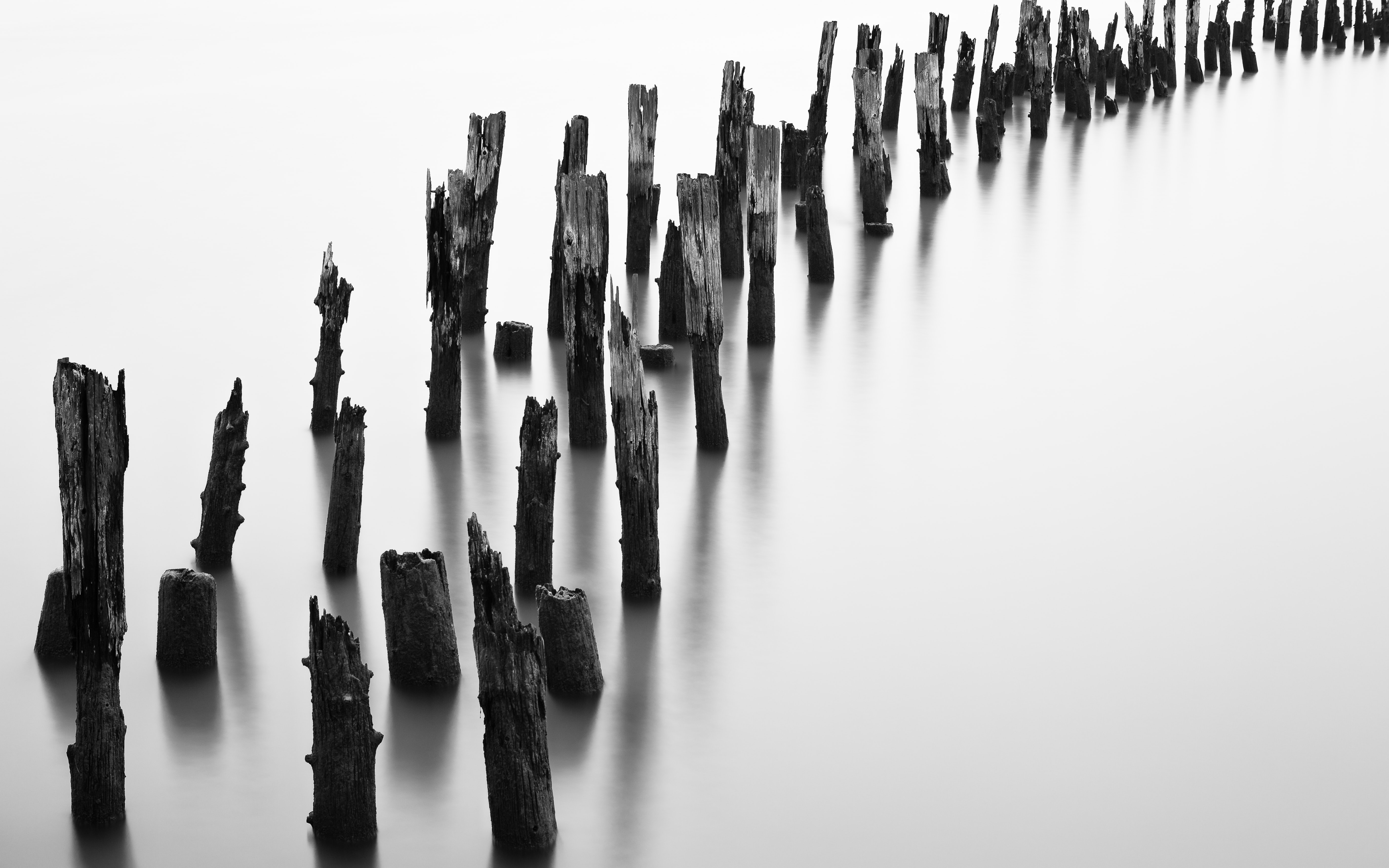 grayscale photo of wood trunks
