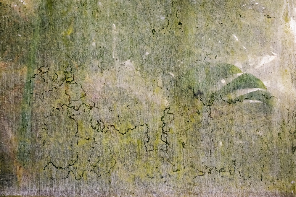 close-up photo of green concrete surface