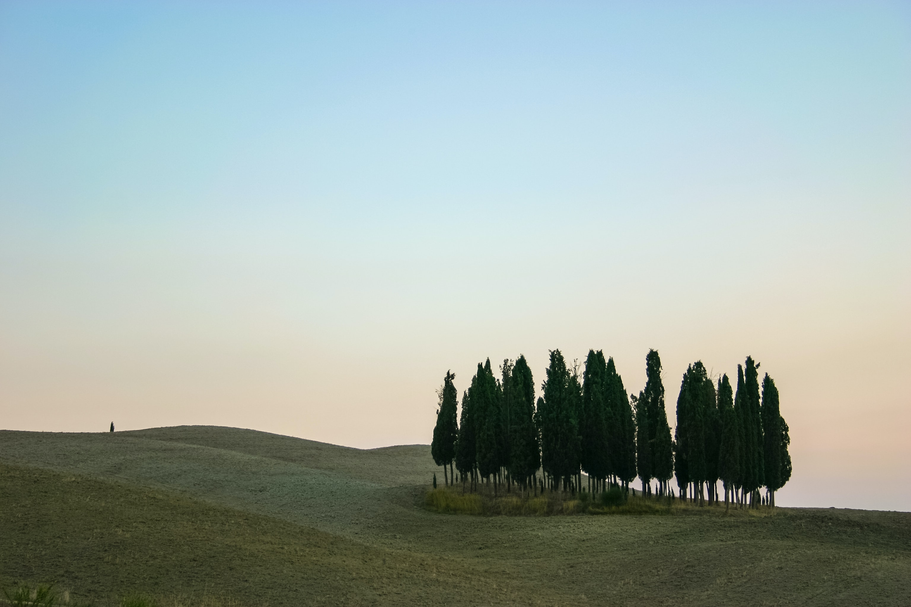 pine trees on hill