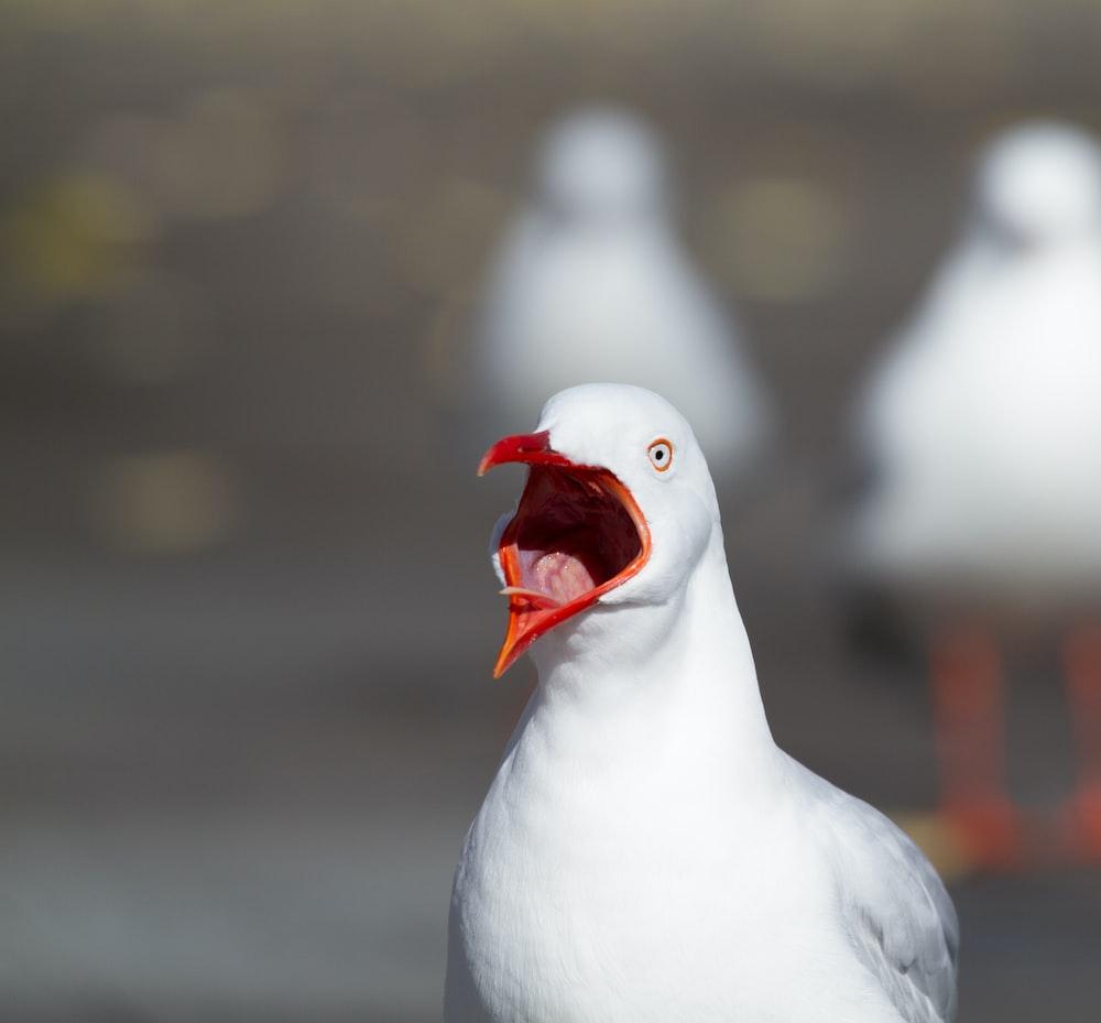 wildlife photography of white bird