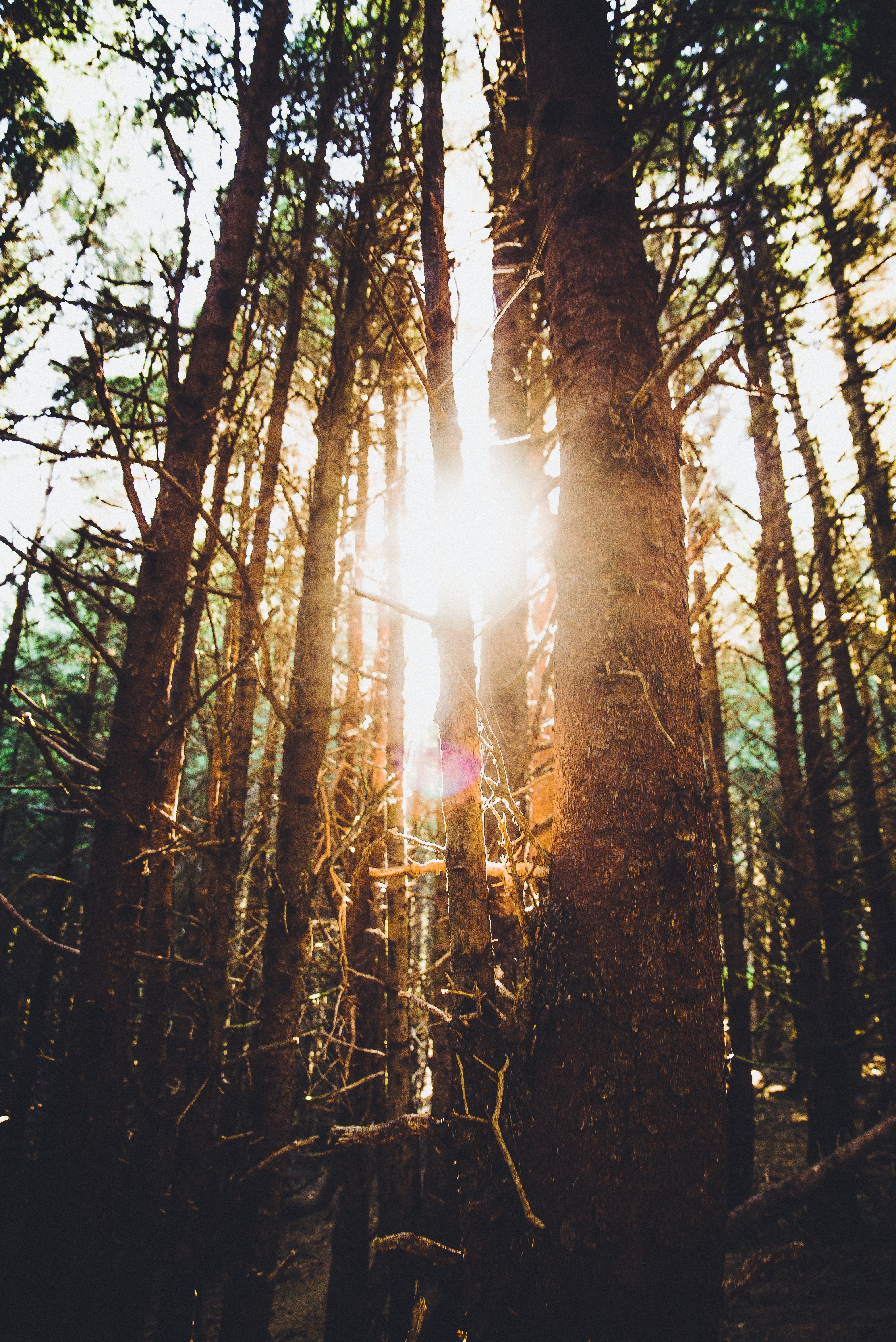 sun rays shining through forest