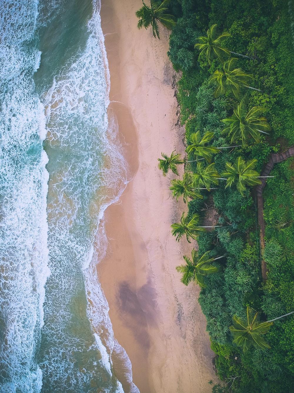 bird's eye view photograph of beach