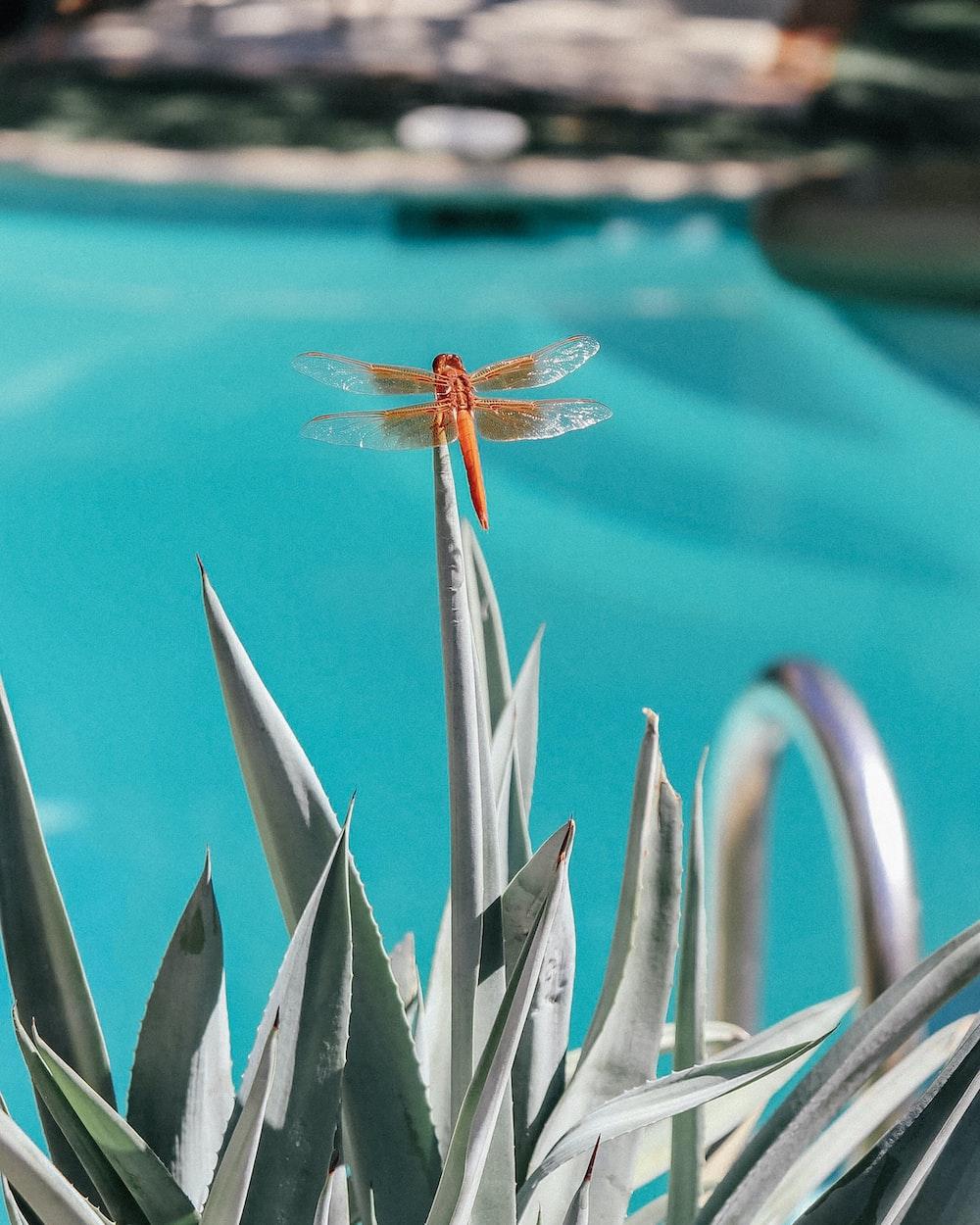 orange dragonfly