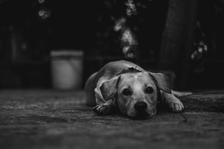 coated dog lying on floor