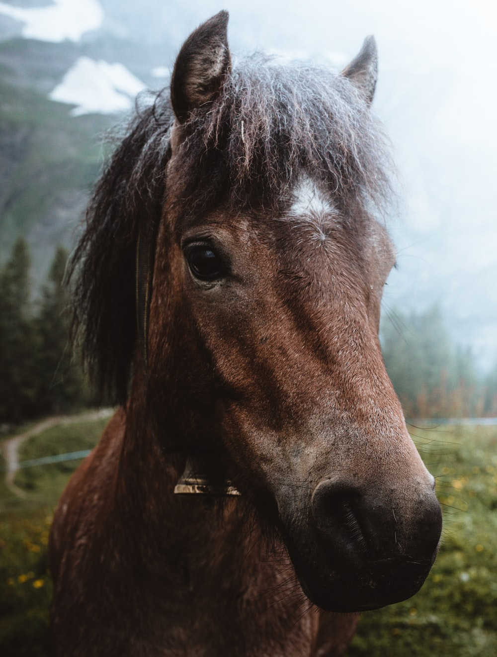 shallow focus photography brown horse