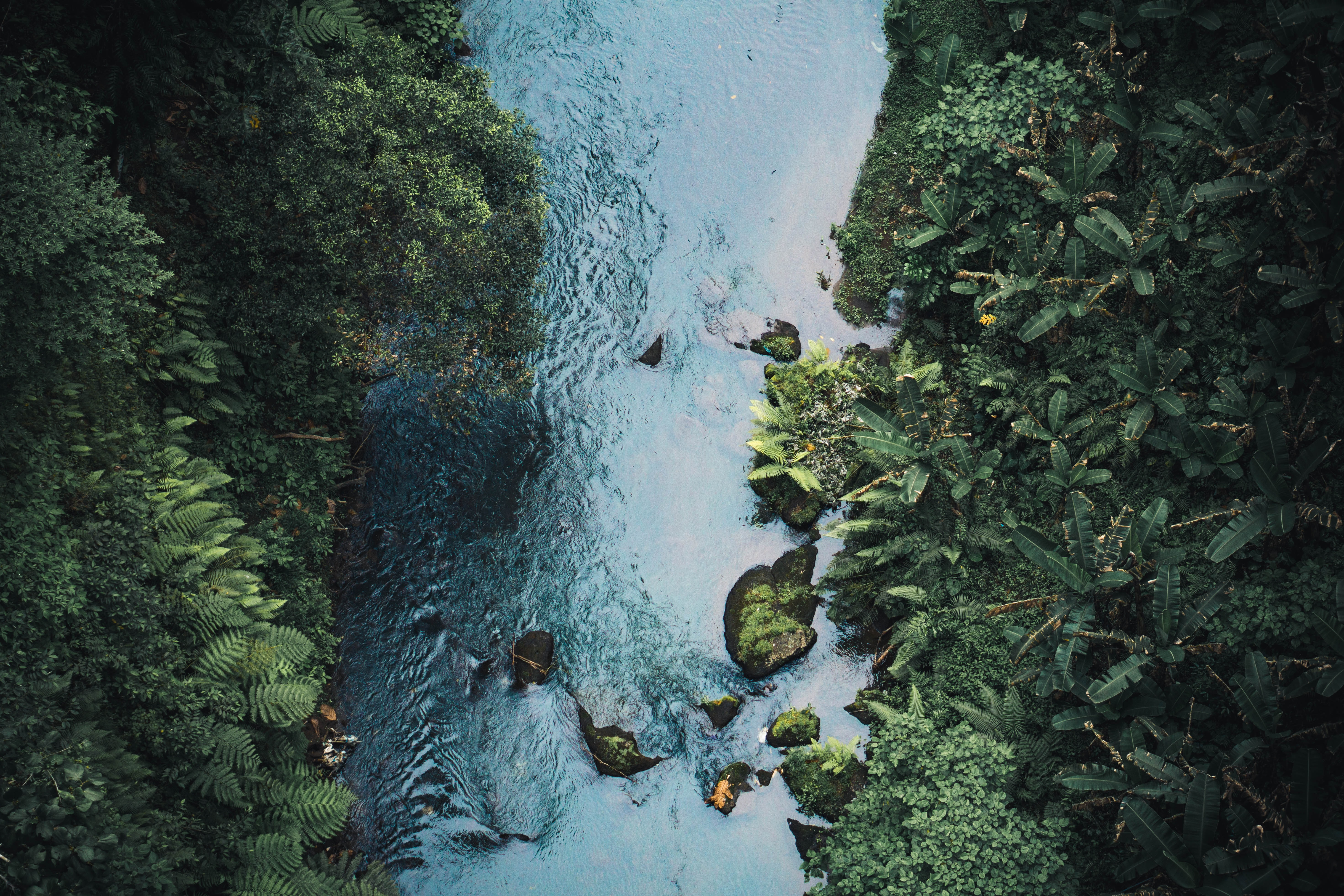 aerial photo of stream between green trees at daytime