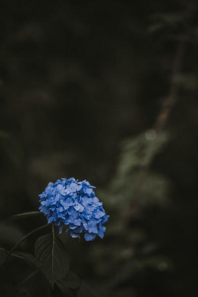3971. Virágok