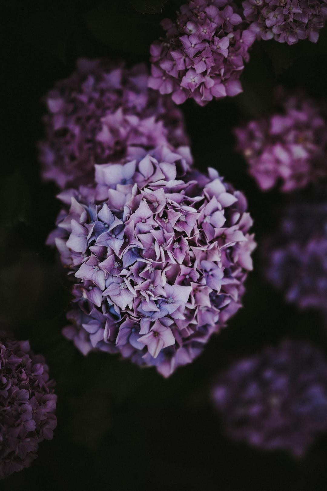 4797. Virágok