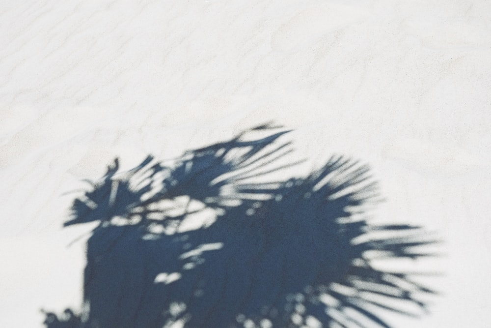 silhouette of palm plant