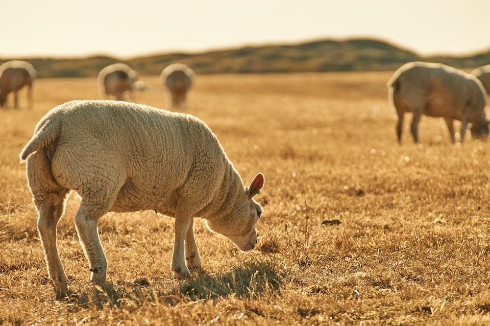 500 Livestock Pictures Download Free Images On Unsplash