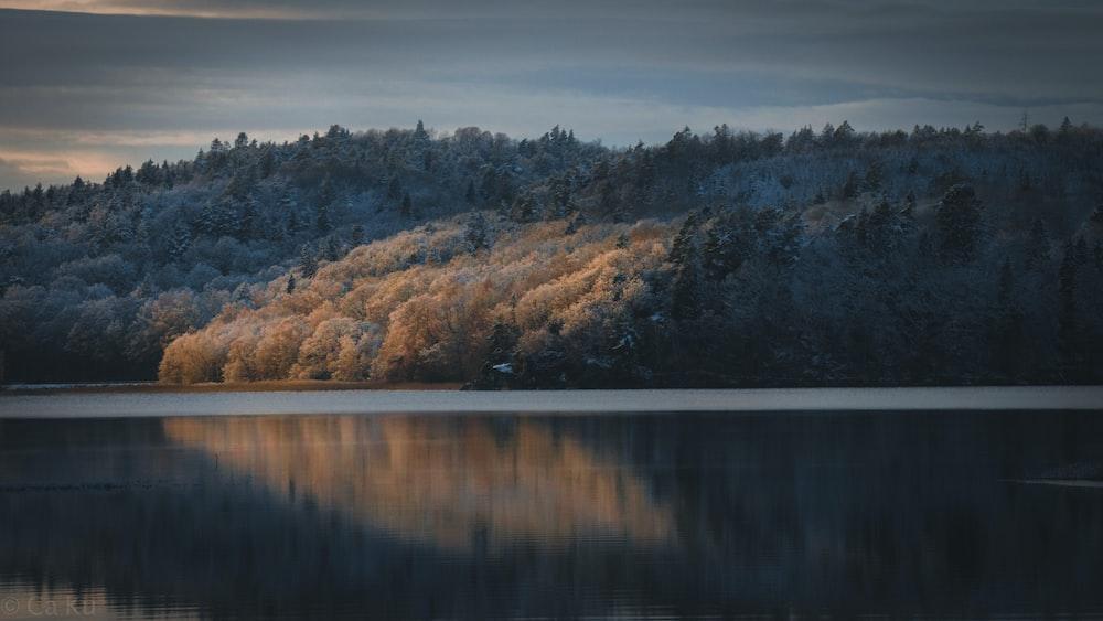 lake beside trees