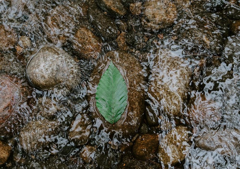 green leaf on water flow