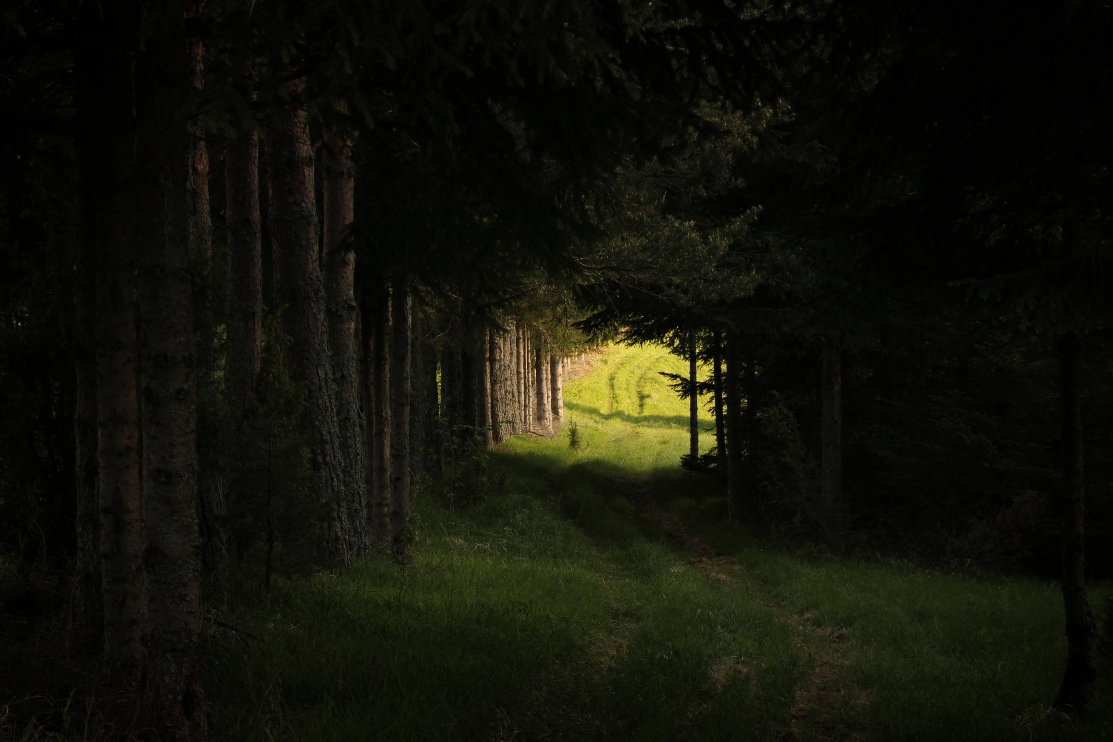green trees near walkway