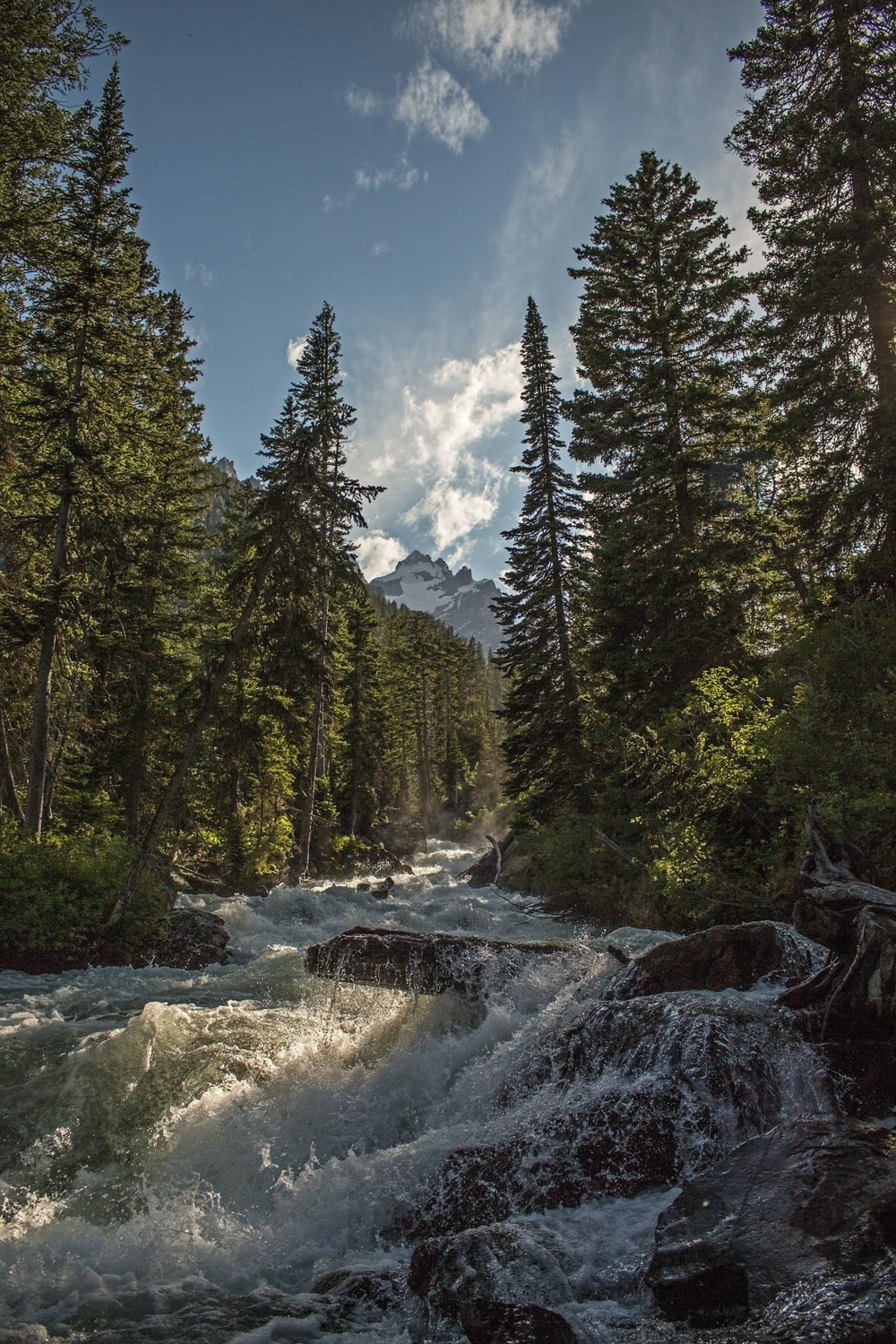 landscape photography of river with trees