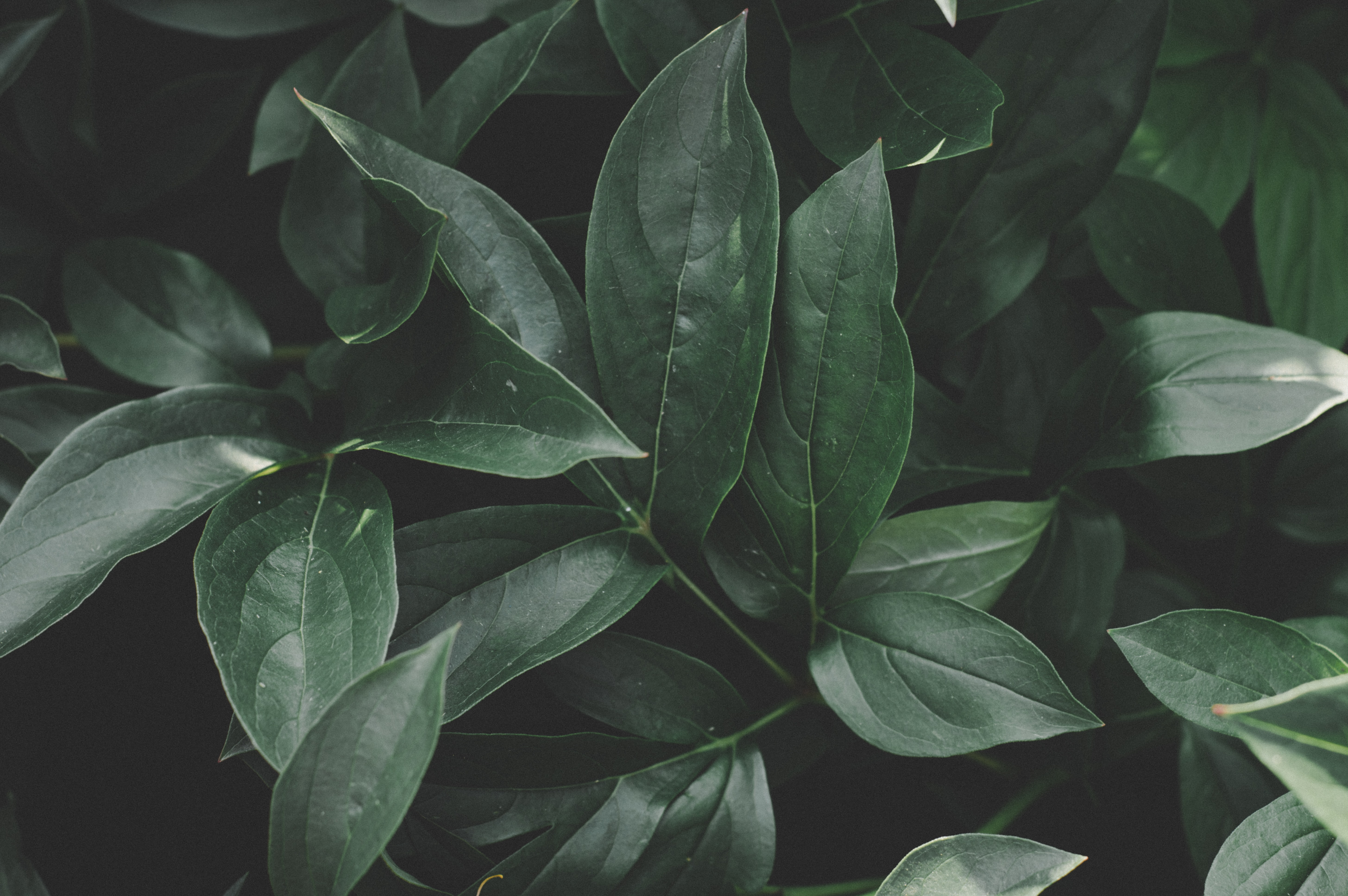 green leafed plant during daytime