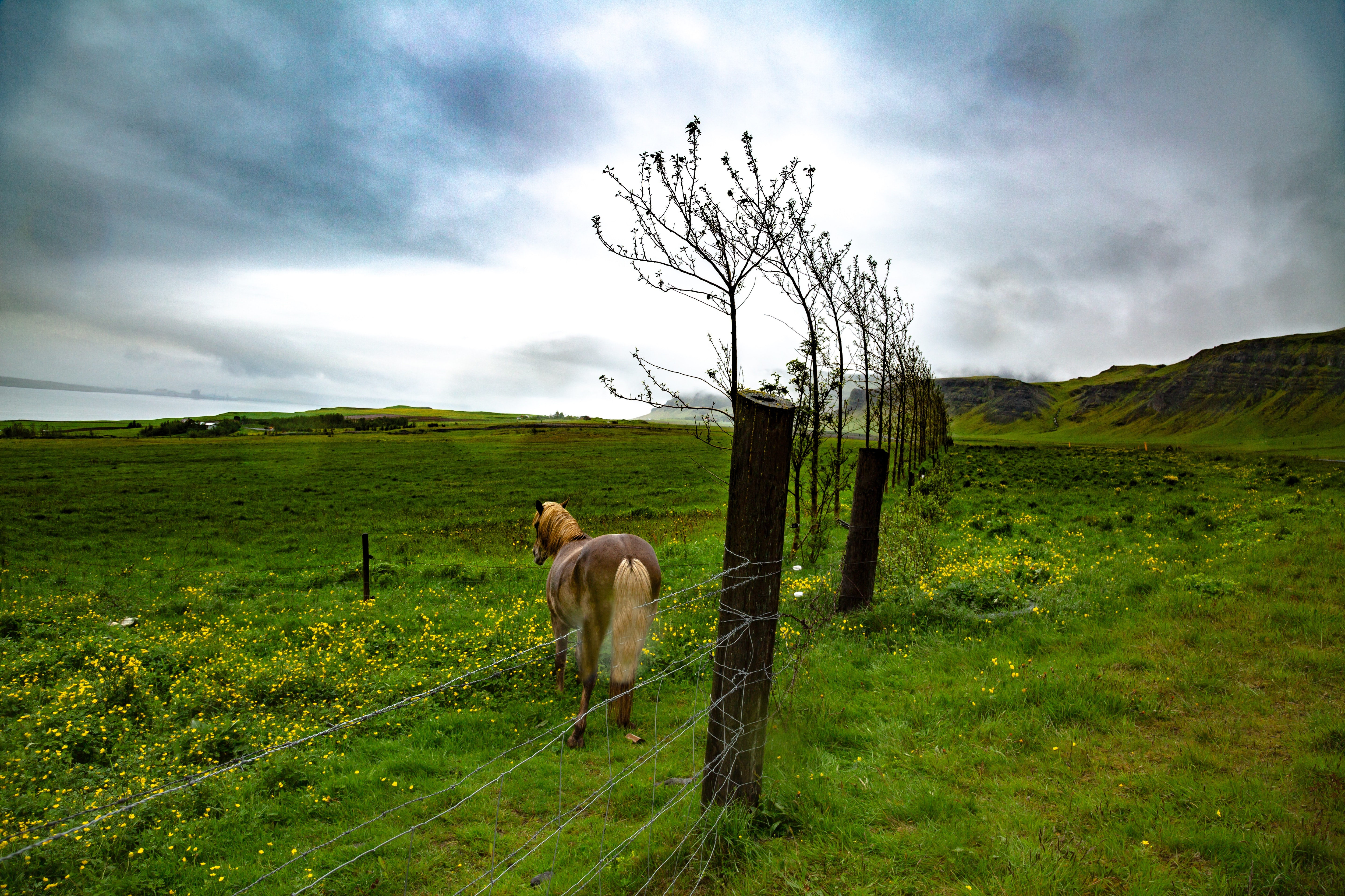 brown horse beside gray fence at daytime