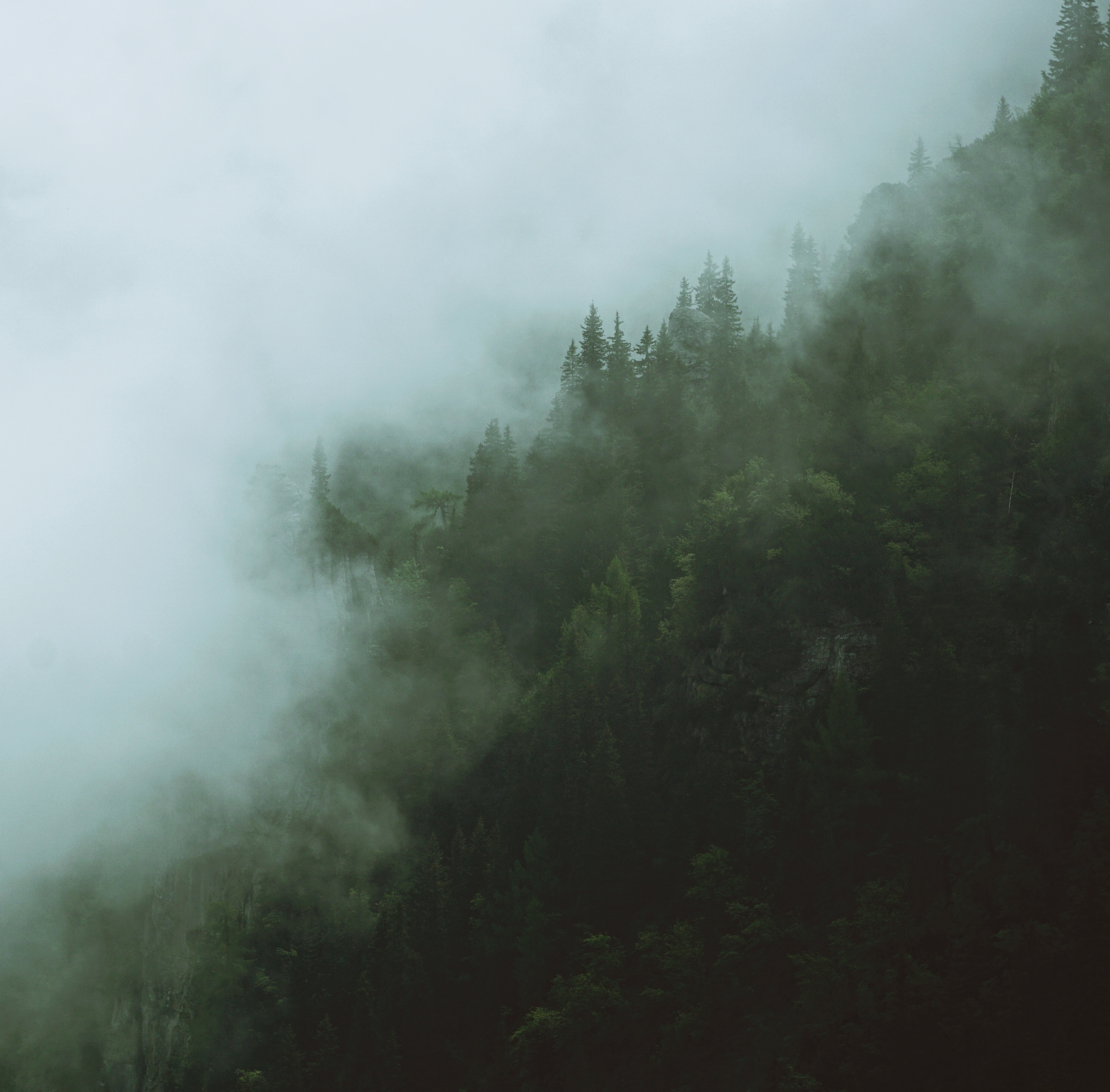 forest covered in white fog