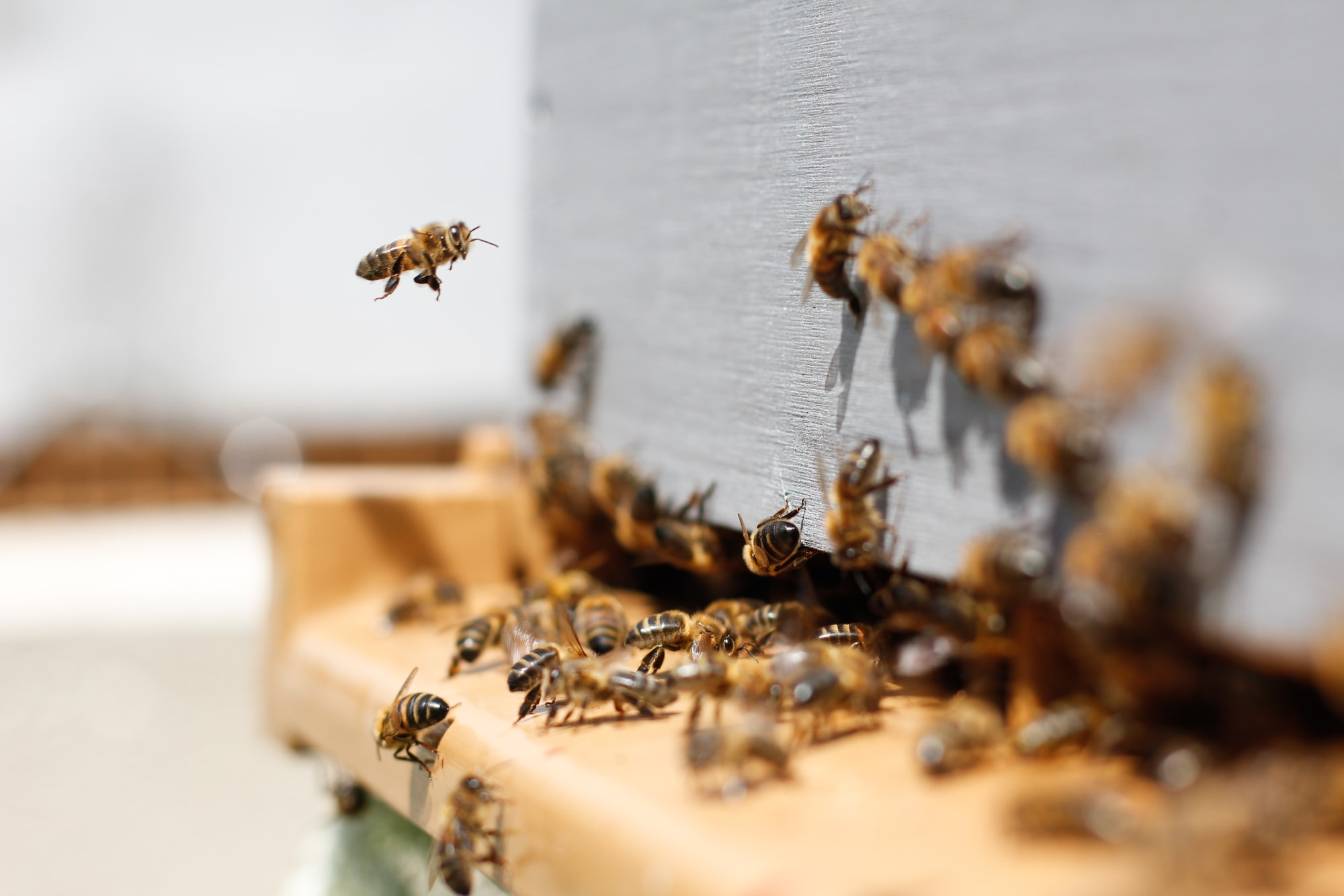 A swarm of bees surround a bee box.