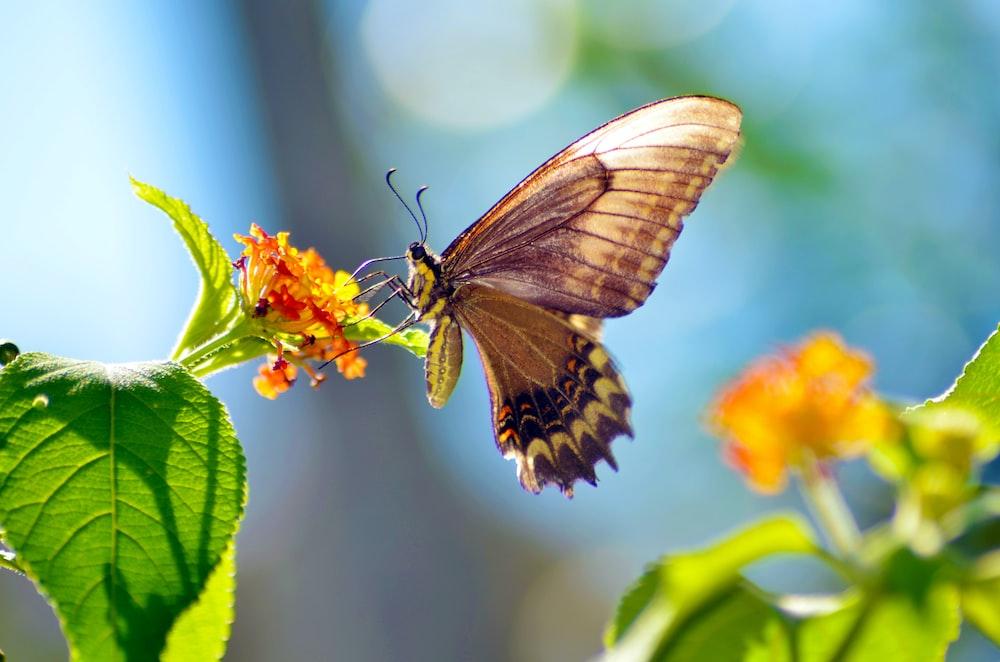 brown butterfly perching on orange petaled flower