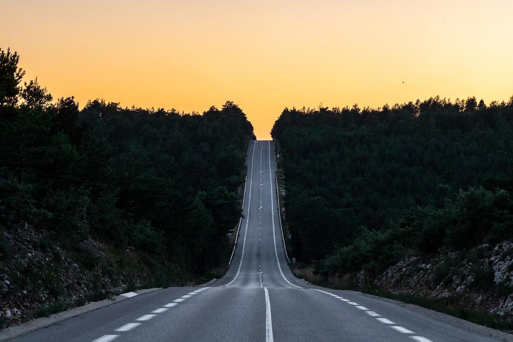 asphalt road between the trees