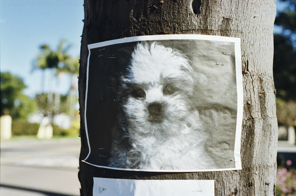 long-coated white puppy poster on tree trunk
