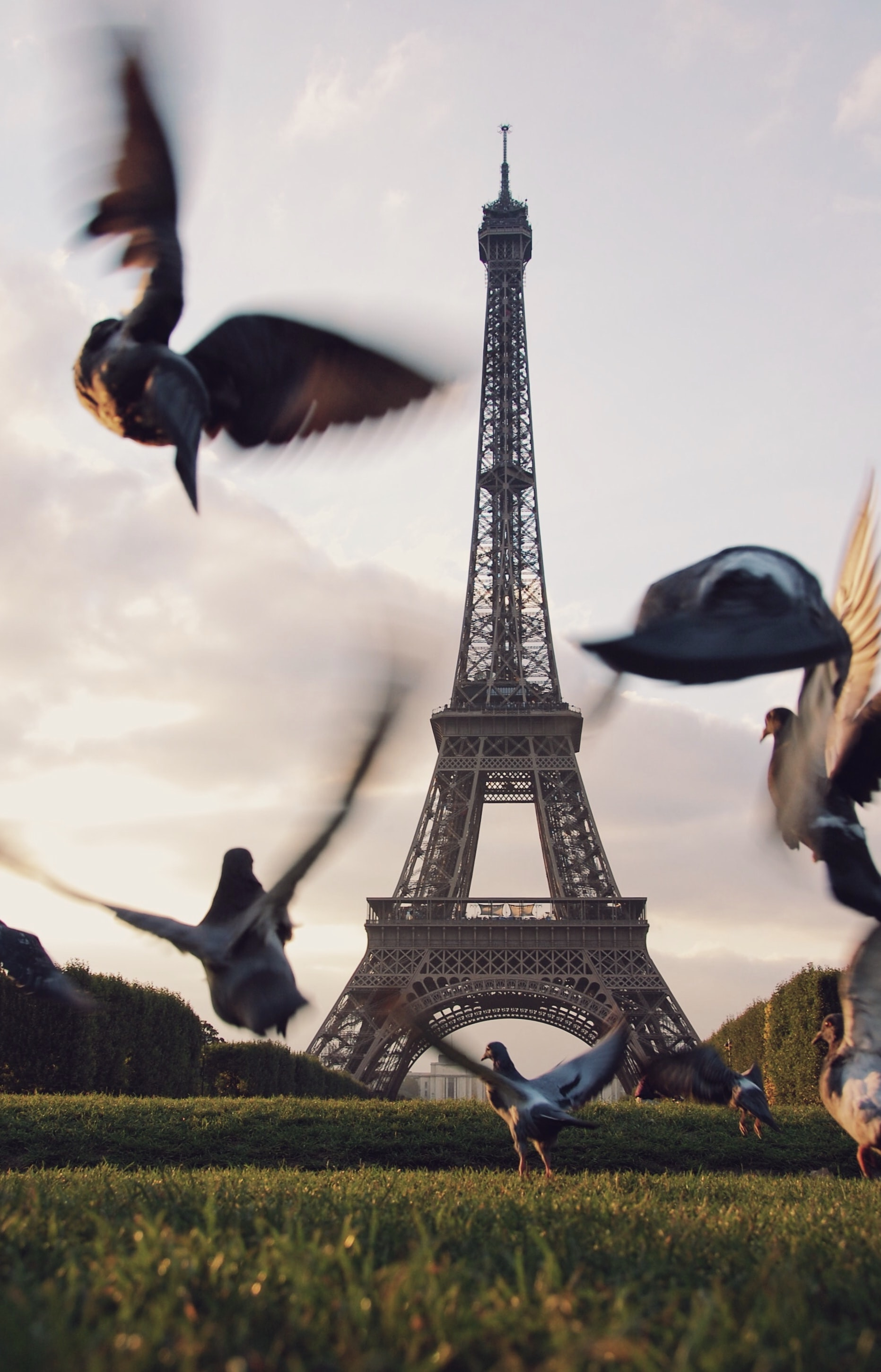flight of pigeons flying above grass field near Eiffel tower in Paris