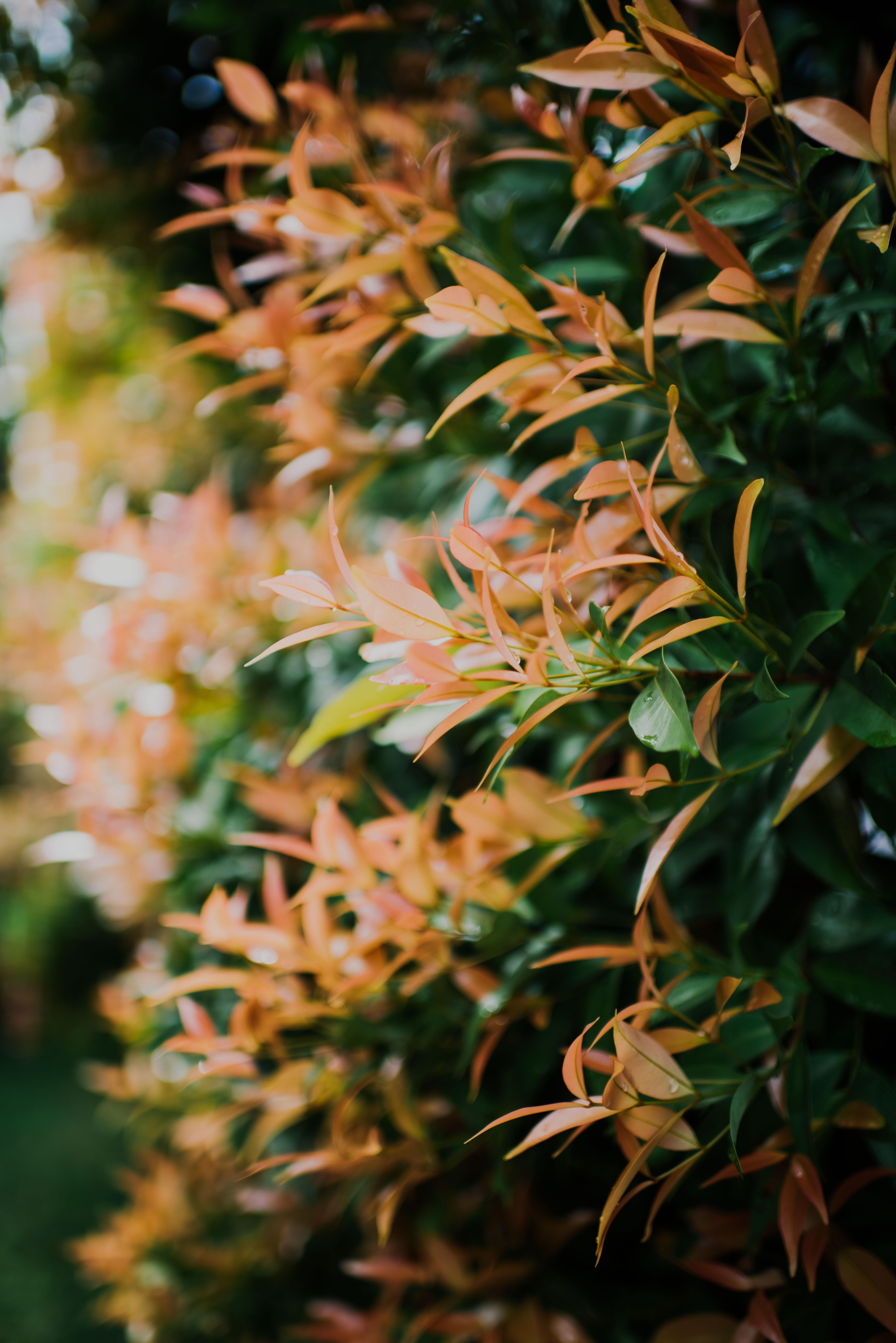 shallow focus photography of orange leafed plants