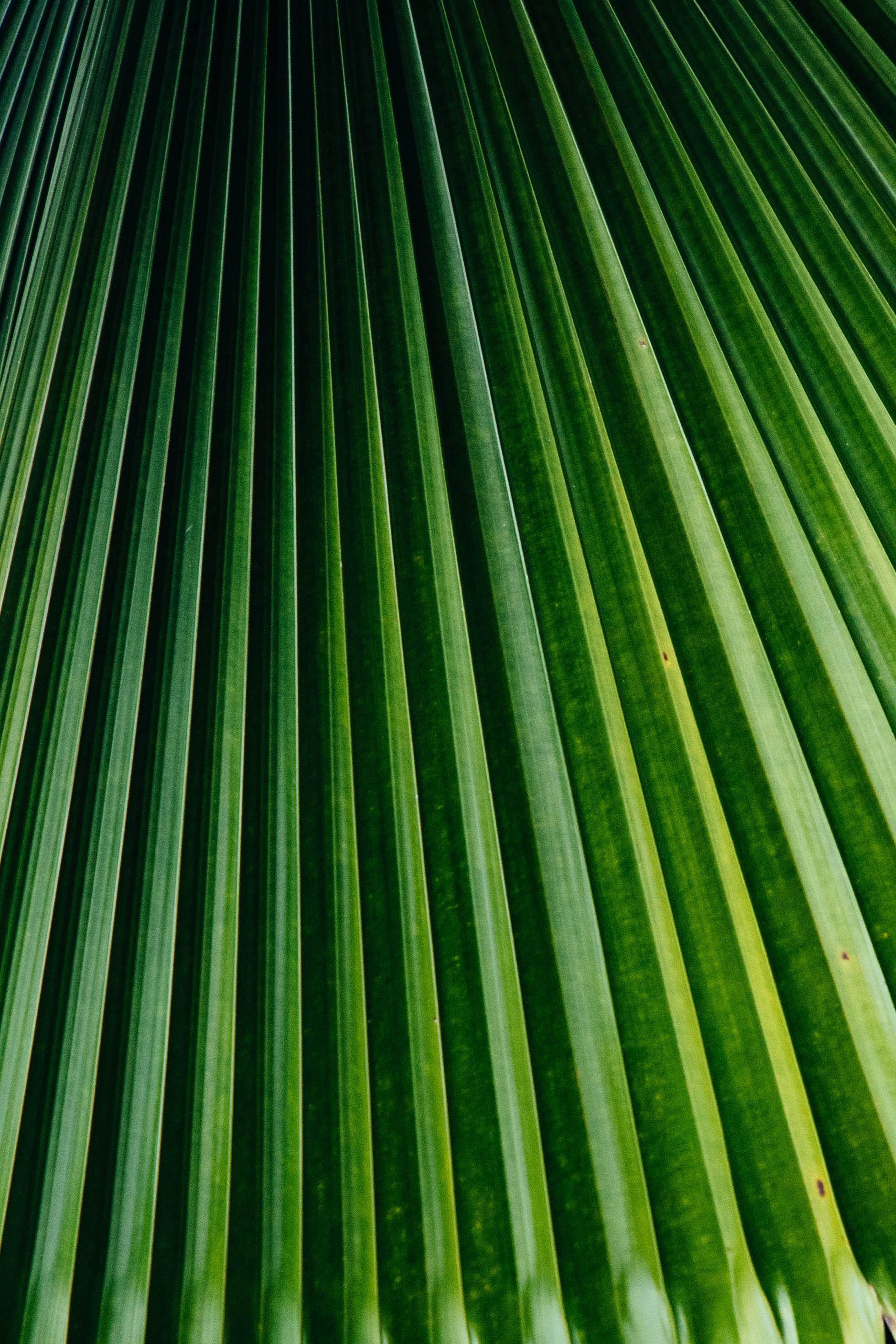 green palm tree leaves