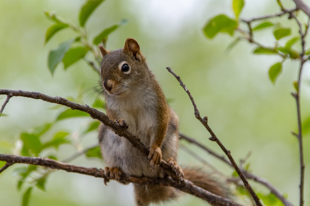 selective focus photograph of squirrel on tree branch