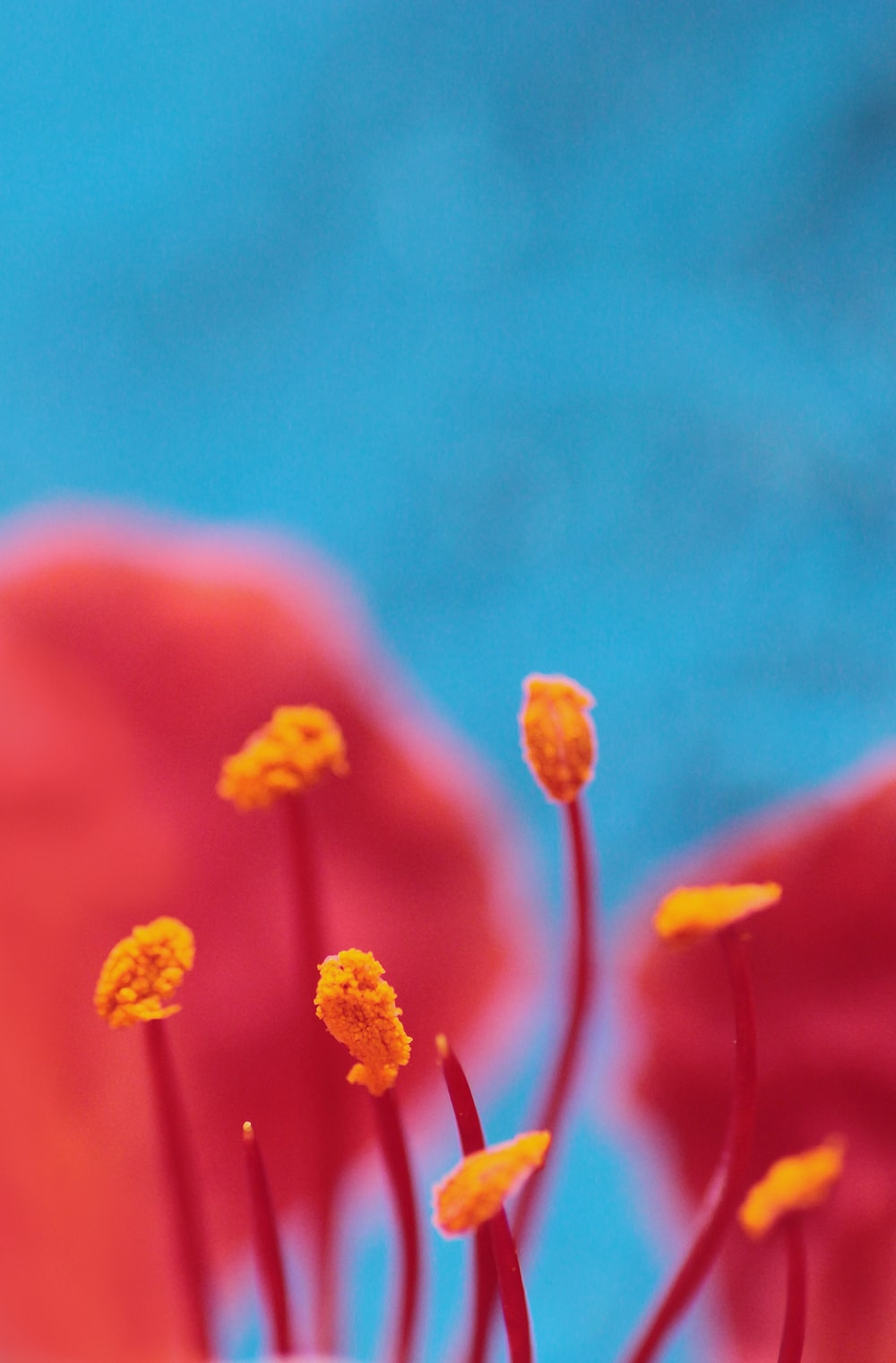 selective focus photography of orange flowers